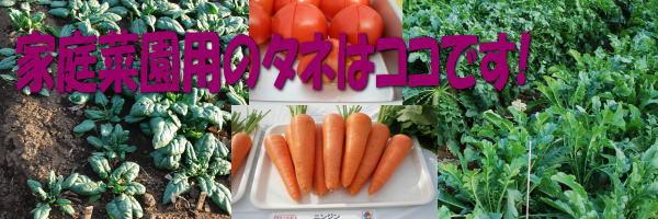 家庭用野菜 タネ
