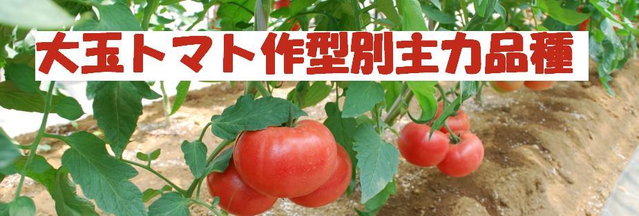 トマト作型