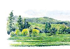 無農薬、無肥料で「無添加畑」を作ろう!