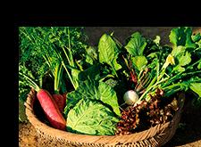 九州天然野菜