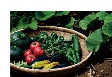 新規就農応援プロジェクト 九州天然野菜