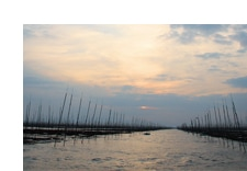 「食の現場訪問」有明海の海苔