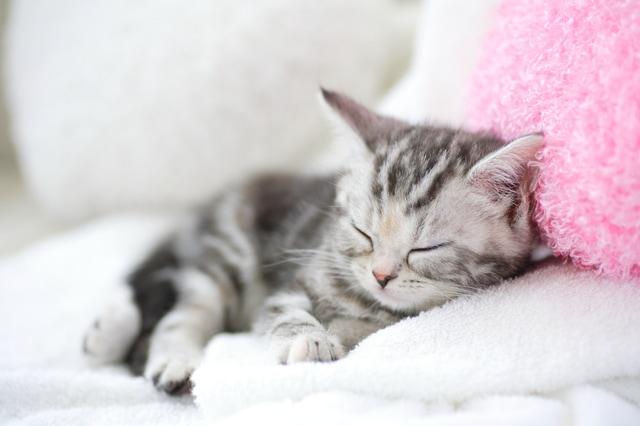 ペットの臭いを強力消臭:スプレー・置き型ジェル