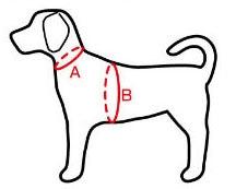 犬のサイズ測定方法画像