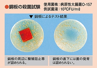 銅板の殺菌試験画像