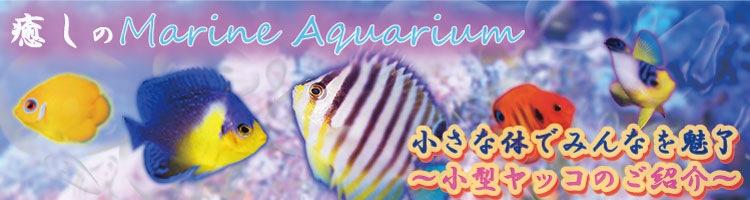 海水魚小型ヤッコ特集