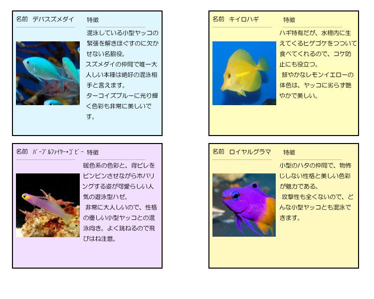 混泳種たち