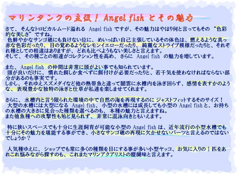 Angel fishとその魅力