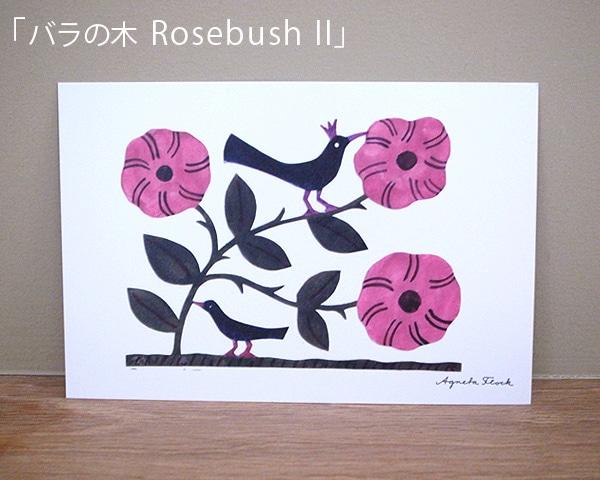 ポストカード「バラの木 RosebushII」