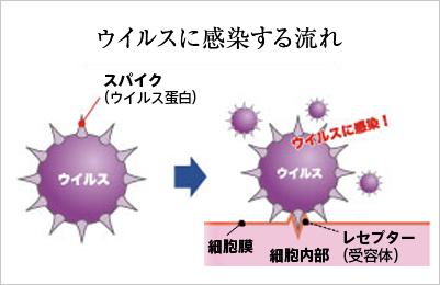 ウイルスに感染する流れ