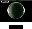 大腸菌 after
