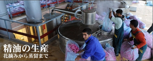 ローズ精油の生産