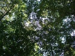 ひのき 木漏れ日