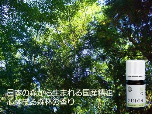 日本の森から ひのき檜精油