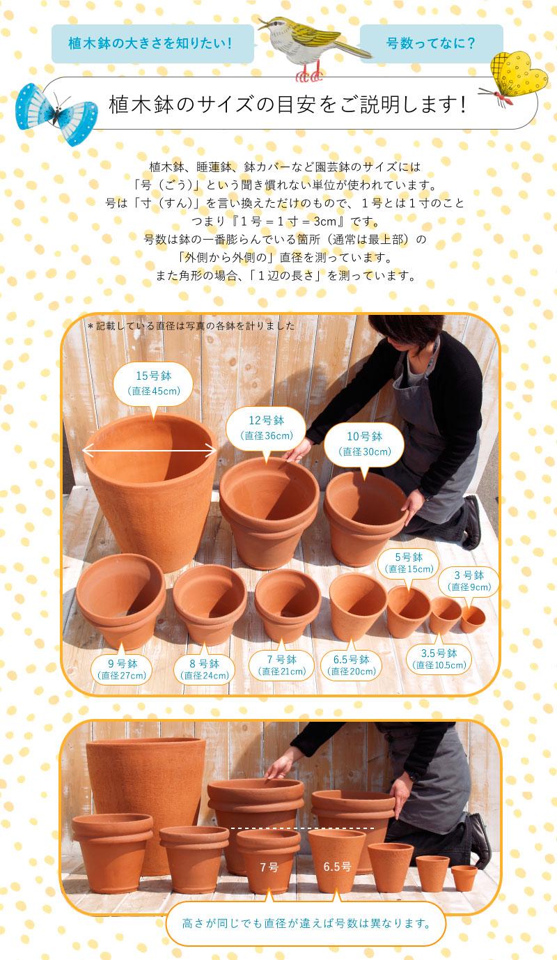 植木鉢のサイズの目安