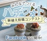 ハチフォト コンテスト
