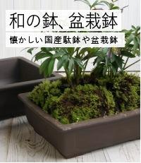 和の鉢、盆栽鉢