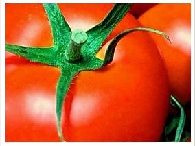 有機トマト缶イメージ