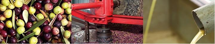 オーガニックオリーブオイルは農薬を使わず羊が雑草を駆除します・機械を使わず手で収穫・有機栽培の畑は草も生え濃い色