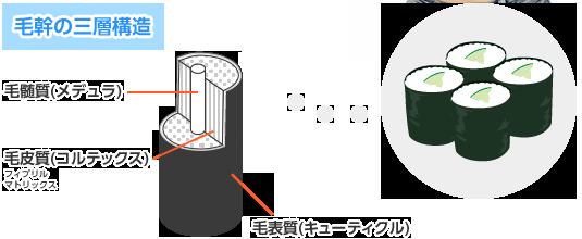 毛幹の三層構造