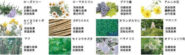 厳選された12種類の植物エキス配合