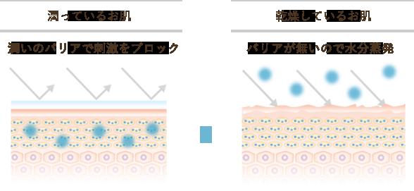 シワ発生のメカニズムと有効成分の作用イメージ