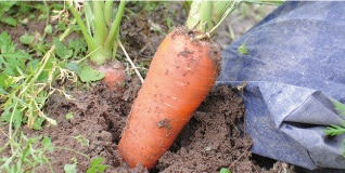 ミモレ農園無添加お野菜を食べるスープ 畑からはじまるスープ作り