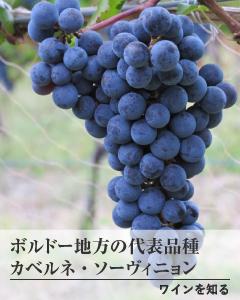 ワインを知る バナー3