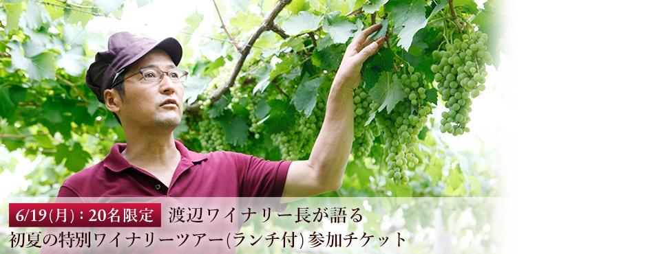 6/19(月):20名限定 渡辺ワイナリー長が語る初夏の特別ワイナリーツアー(ランチ付)参加チケット