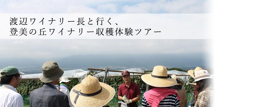登美の丘ワイナリー収穫体験ツアー報告