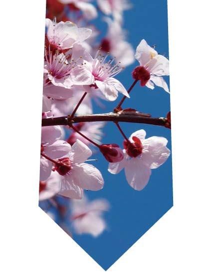 青空と桜ネクタイの写真