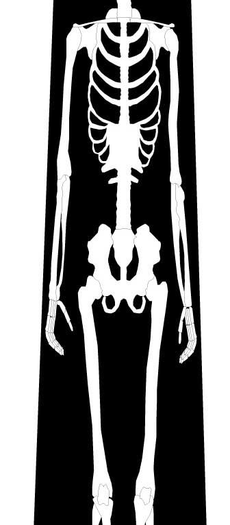 骨ネクタイの写真