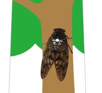 一匹の蝉ネクタイの写真