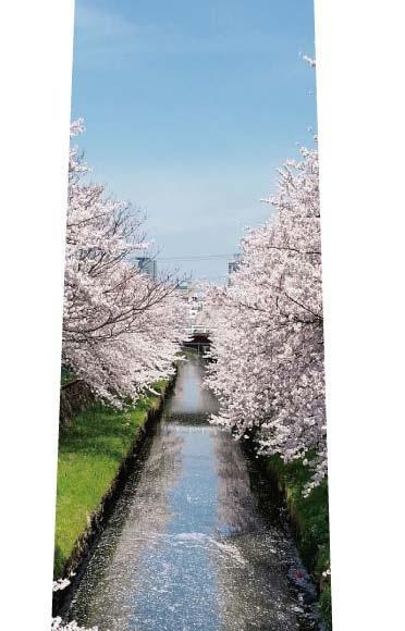 川辺の桜並木ネクタイの写真