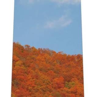 紅葉した山ネクタイ(写真)の写真