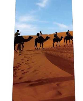砂漠ネクタイの写真
