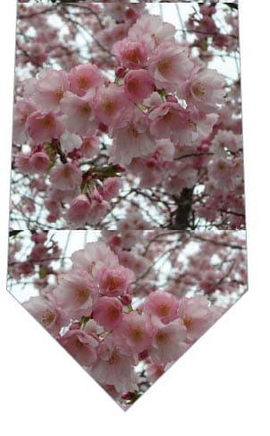 桜2(写真)ネクタイの写真