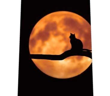 月と猫ネクタイの写真