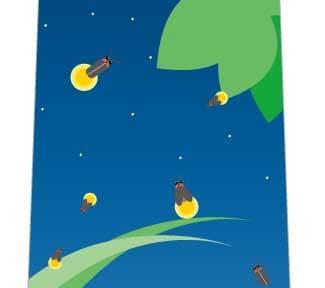 夜空とホタルネクタイの写真