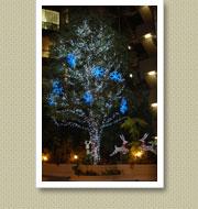 クリスマスイルミネーション施工写真-青山結婚式場1