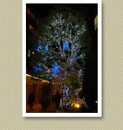 クリスマスイルミネーション施工写真-青山結婚式場2