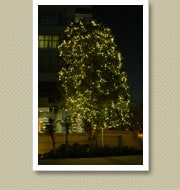 クリスマスイルミネーション施工写真-東雲マンション1