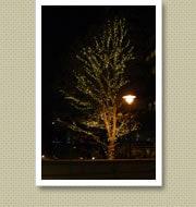 クリスマスイルミネーション施工写真-東雲マンション2