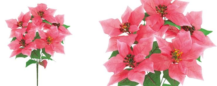 ハワイアンポインセチアブッシュx5 ピンク