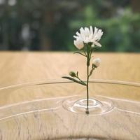 グラスやボウル、水盤に浮かべる花器 一輪挿し Floating Vase RIPPLE