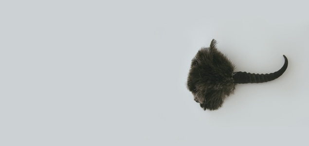 REDECKER レデッカー/オーストリッチ羽はたきホーン28cm [REDECKERの羽はたき/おしゃれなダスターはレデッカー]
