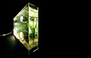 プライベート アクアリウム 水槽 使用イメージ
