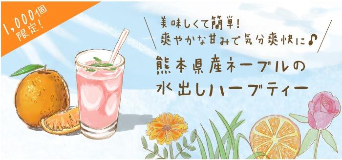 熊本県産ネーブルの水出しハーブティー