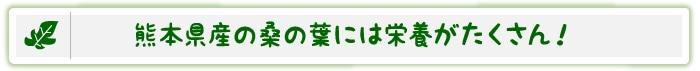 熊本県産の桑の葉には栄養がたくさん!