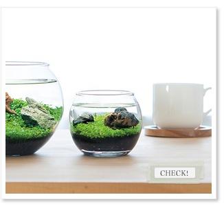 種から育てる水草 WATER PLANT 栽培セット S